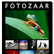 New Issue of Fotozaar Now Available! - PhotoNaturalist