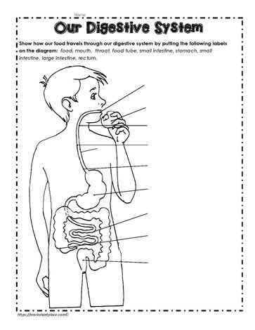 30 Label The Digestive System Answer Key