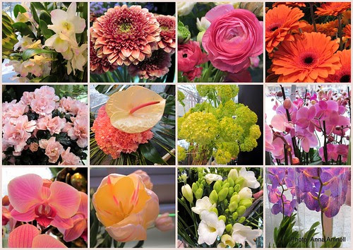 Kukkakaupassa - Flower shop