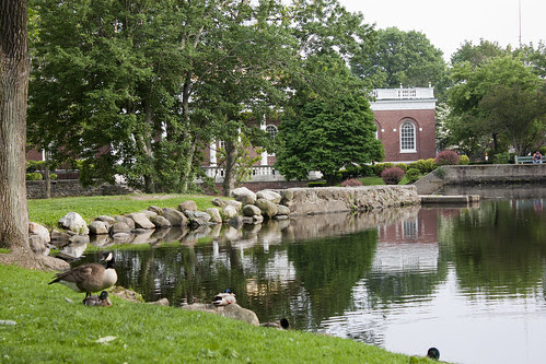 Milford, CT Duck Pond