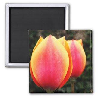 tulip magnet magnet