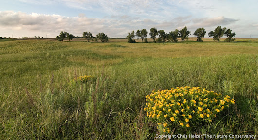 The Difference between Prairie Restoration and Reconstruction