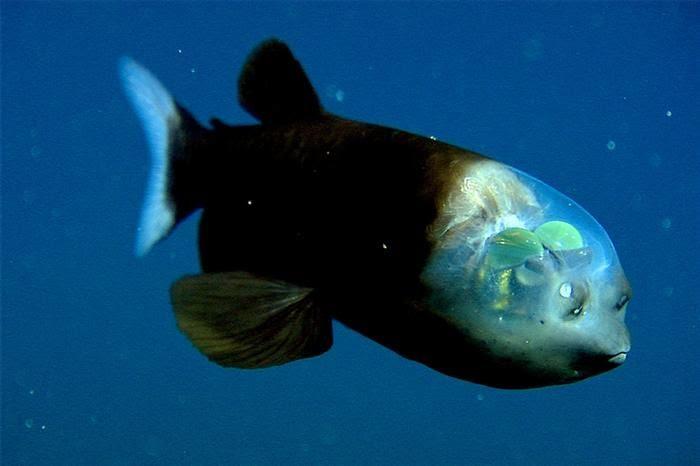 דגים, מסתוריים, מדהים, ים, מדהים, יפים, מרהיבים