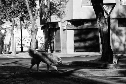 Cruza, te espero... by Alejandro Bonilla