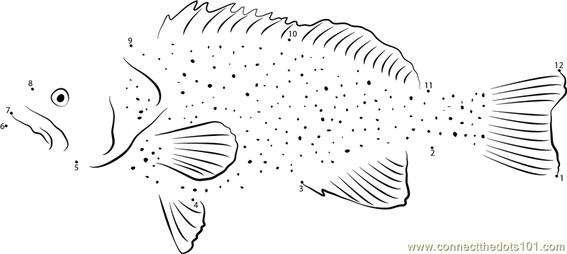Connect the Dots Grouper in Underwater (Fishes > Grouper ...