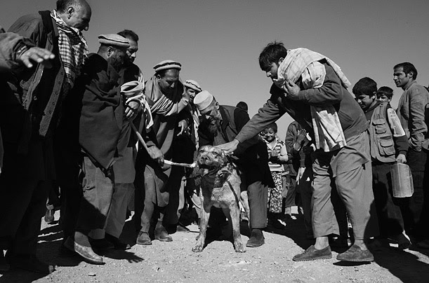 The Other Fighting Season<br />In Afghanistan, dog fighting in the winter months has made a comeback since the Taliban�s ouster. <br />Photographs by Lorenzo Tugnoli
