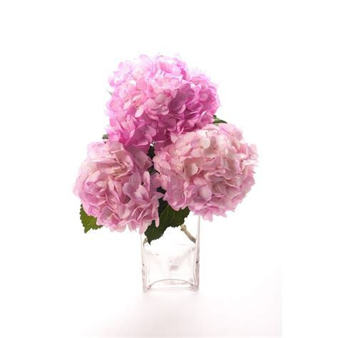 Mother's Day Pink Hydrangea   Flower Muse