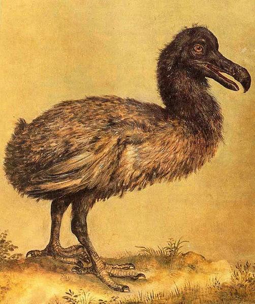 O dodó, tipo de ave que foi extinto da natureza devido à ação humana (Foto: Jacob Hoefnagel/Wikimedia Commons)