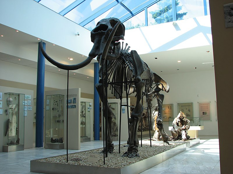 File:Mammoth skeleton 01.JPG