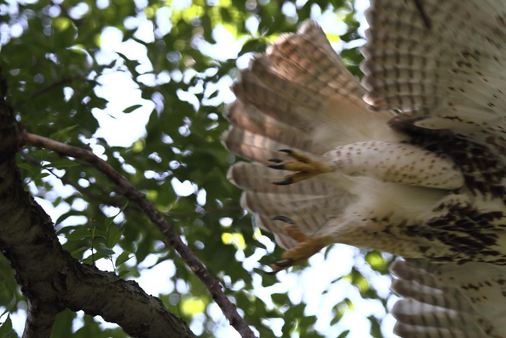 HawkHop