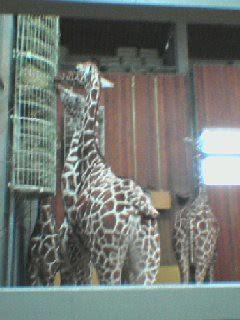 ne besuch im zoo