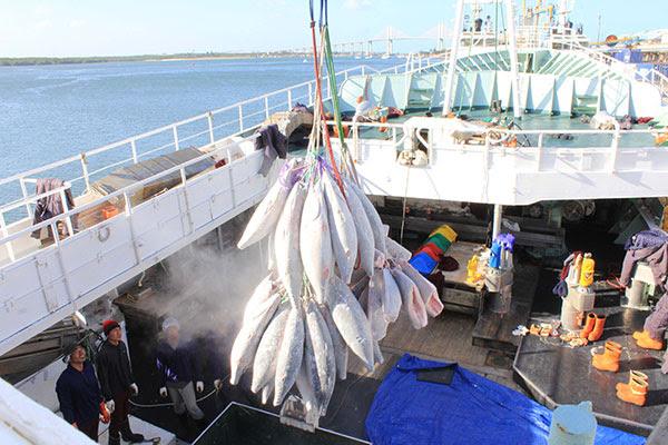 Brasil luta para aumentar limite de toneladas permitidas para pesca de atum e há disputa com países asiáticos