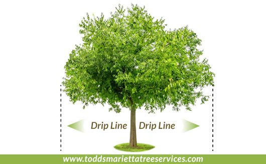 Tree Protection Instructions During Construction, Landscaping, and Hardscaping Projects