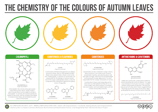 The Chemistry Behind The Brilliant Colors Of Autumn Leaves