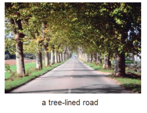 a tree-lined road