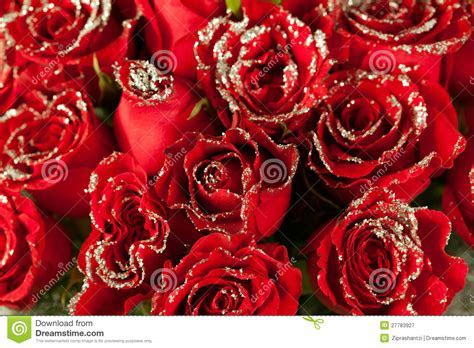 Red Rose Flowers With Sparkle Particles Stock Image