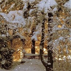 Beautiful Winter Wonderland