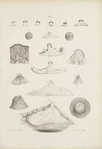 Showing first the size of the gland at different ages (Cooper, 1840)