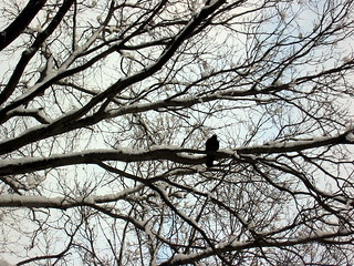 1 of 13 ways of looking at a crow