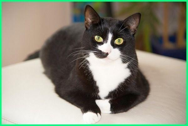 Nama Untuk Kucing Betina Dan Artinya 81021 Nama Untuk Kucing Comel Lucu Dan Unik