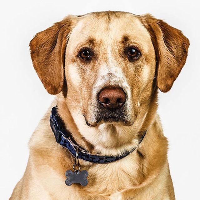 Retratos de cães cheios de personalidade 12