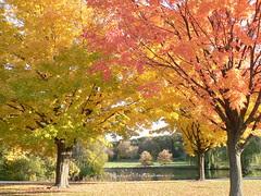 Autumn in Wisconsin by bermudafan8