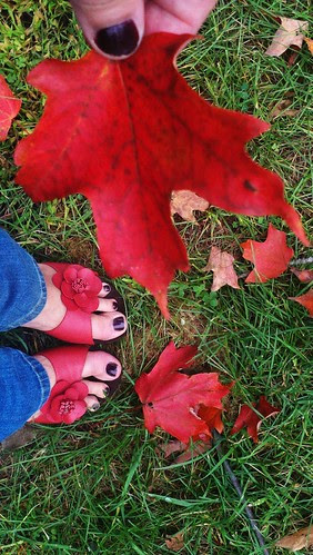 Leaves ~ Red