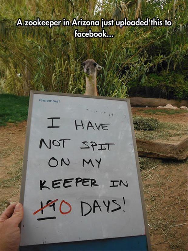 zoo sign, zookeeper joke