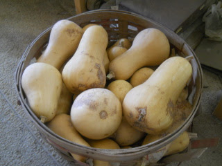 Basket of Butternut Squash