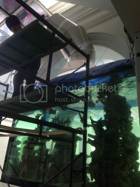 7,000 litres Natural reef tank - Thailand - Page 10 - Reef Central Online Community