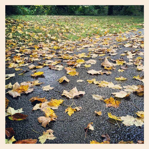 #fall #newhampshire #rainyday #foliage #leaves #driveway #rain #leaf