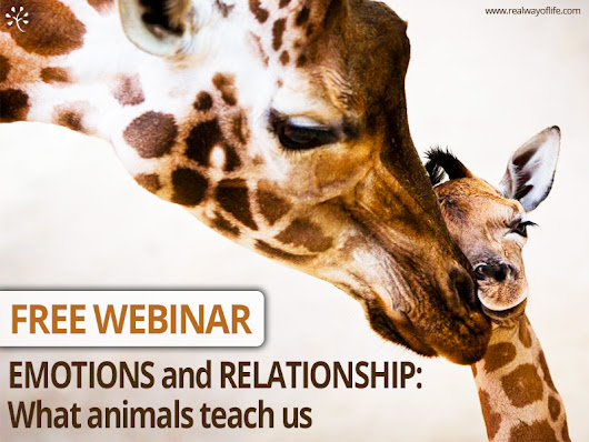 Real Way of Life | Webinar - Emotions and Relationships: what animals teach us. Ethology and neurosciences to better understand and manage human emotions