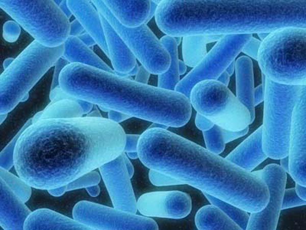 Legionella. (Source: https://wwwn.cdc.gov)