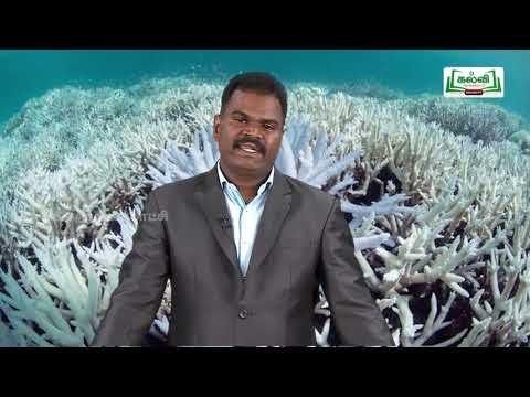 ஆய்வுக் கூடம் Std 8 Science தாவர உலகம் Part 02 Kalvi TV