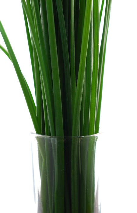 chives© by Haalo