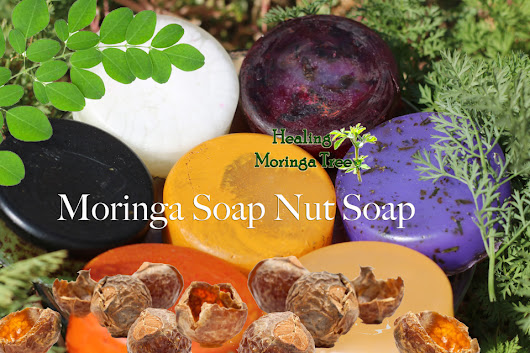 Moringa Soap Nut Soap Bars