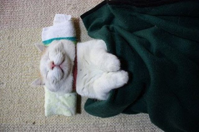 The Laziest Cat in the World (25 pics)