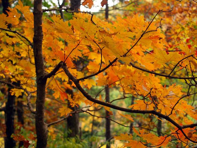 Fall color close-up
