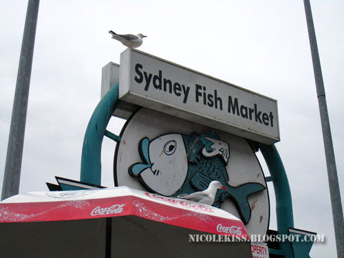 seagull and sydney fish market