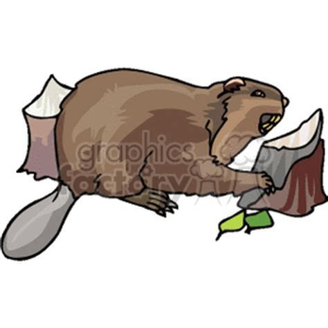 Download beaver eating wood cartoon royalty free clipart