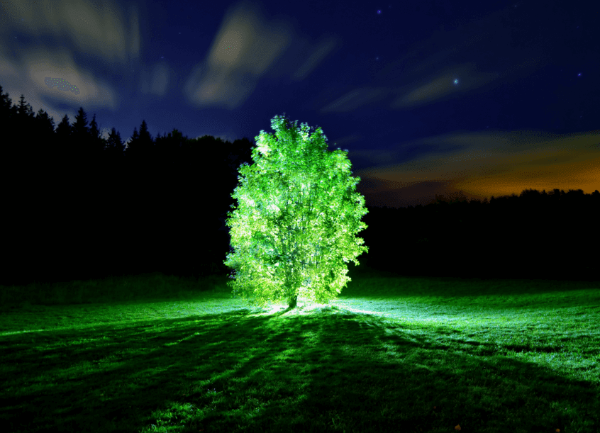 MIT Just Created Living Plants That Glow Like A Lamp, And Could Grow Glowing Trees To Replace Streetlights