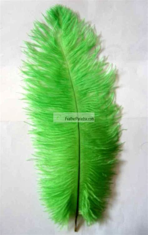 Lime Green Ostrich Plume Feathers Wholesale 18 20 inch