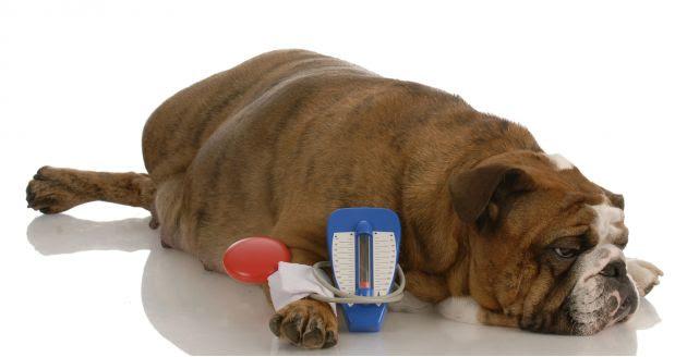 La Diabetes Canina Clinica Veterinaria San Jorge