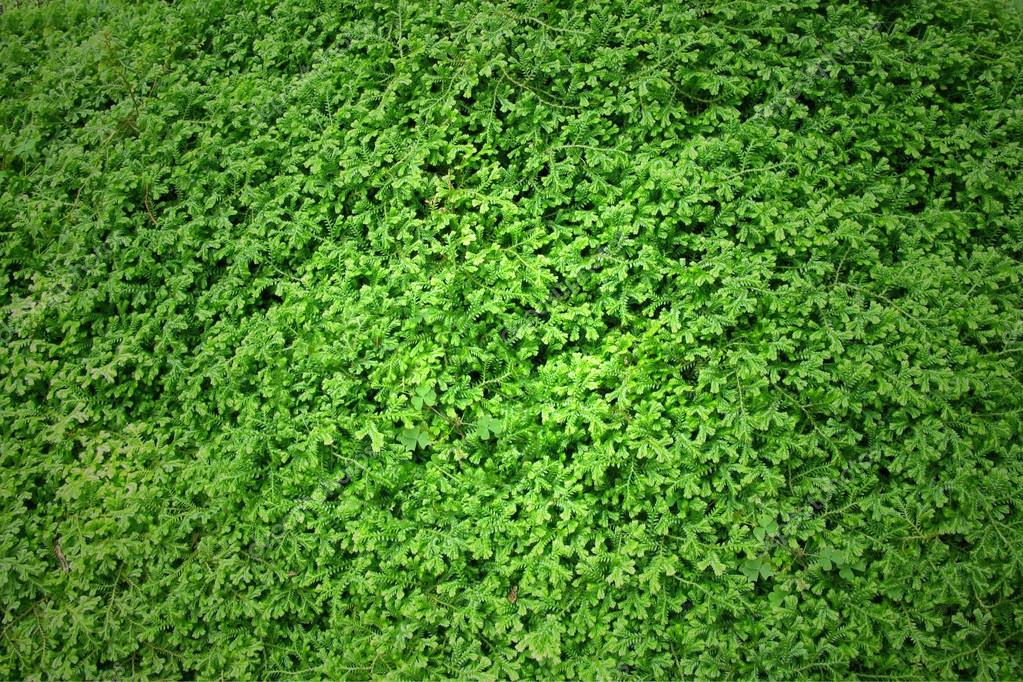 depositphotos_28775537 stock photo green moss texture