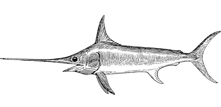 Kılıç Balığı Hakkında Bilgi