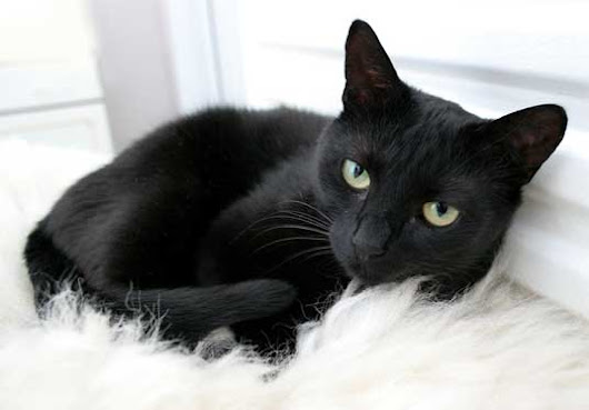 Why Black Cat Means Bad Luck - Cats Breed