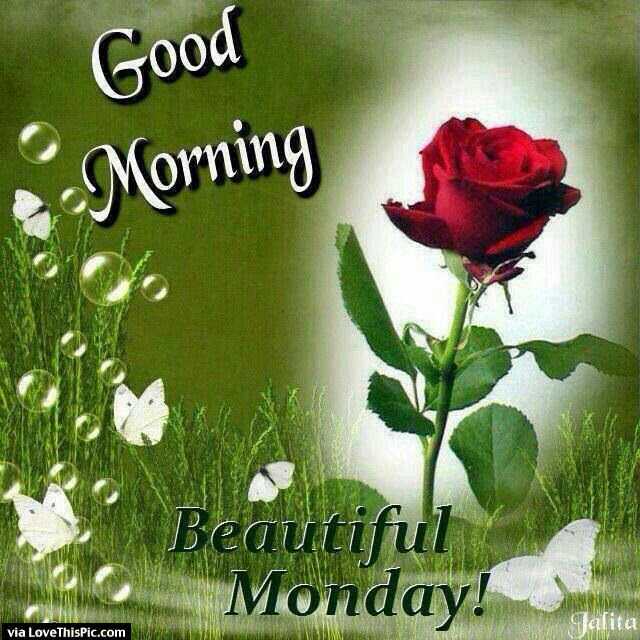 Good Morning Beautiful Monday Pictures Photos And Images For