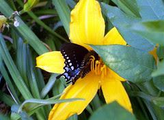 Flower_Butterfly_610c