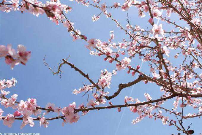 http://i402.photobucket.com/albums/pp103/Sushiina/cityglam/springoutfit4_zps582a4471.jpg?t=1366059475