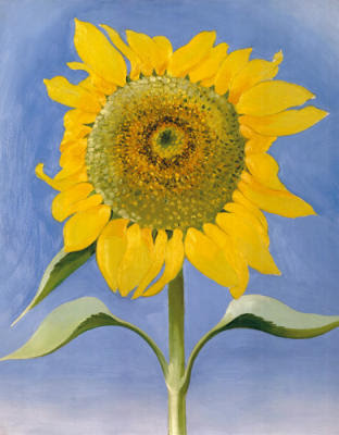 Sunflower, New Mexico, 1935